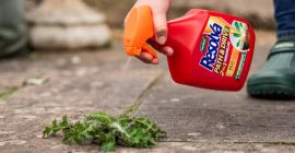 How to Kill Weeds on Your Path or Patio