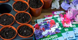 Seeds to Sow in February