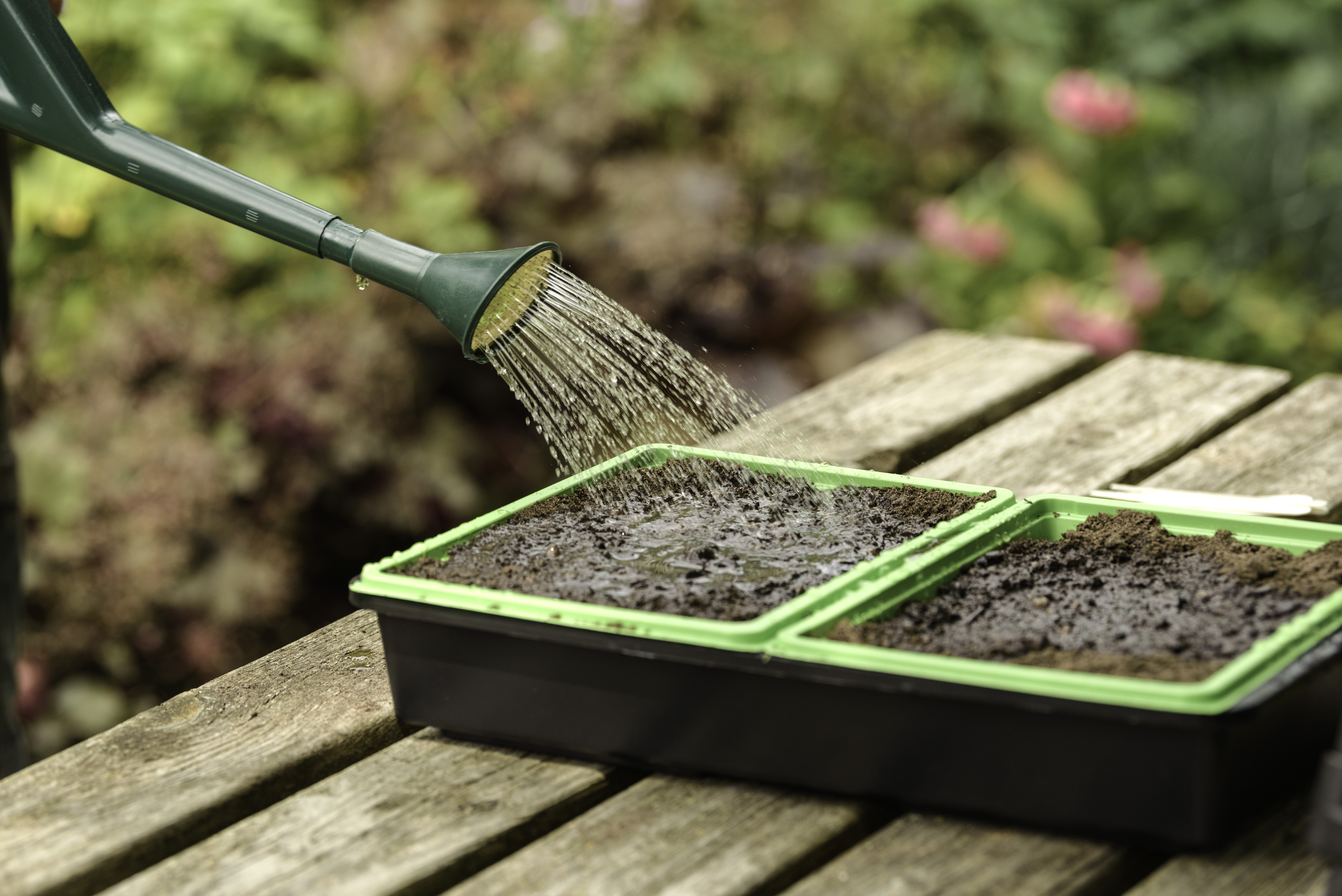 How To Sow Seeds Garden Health