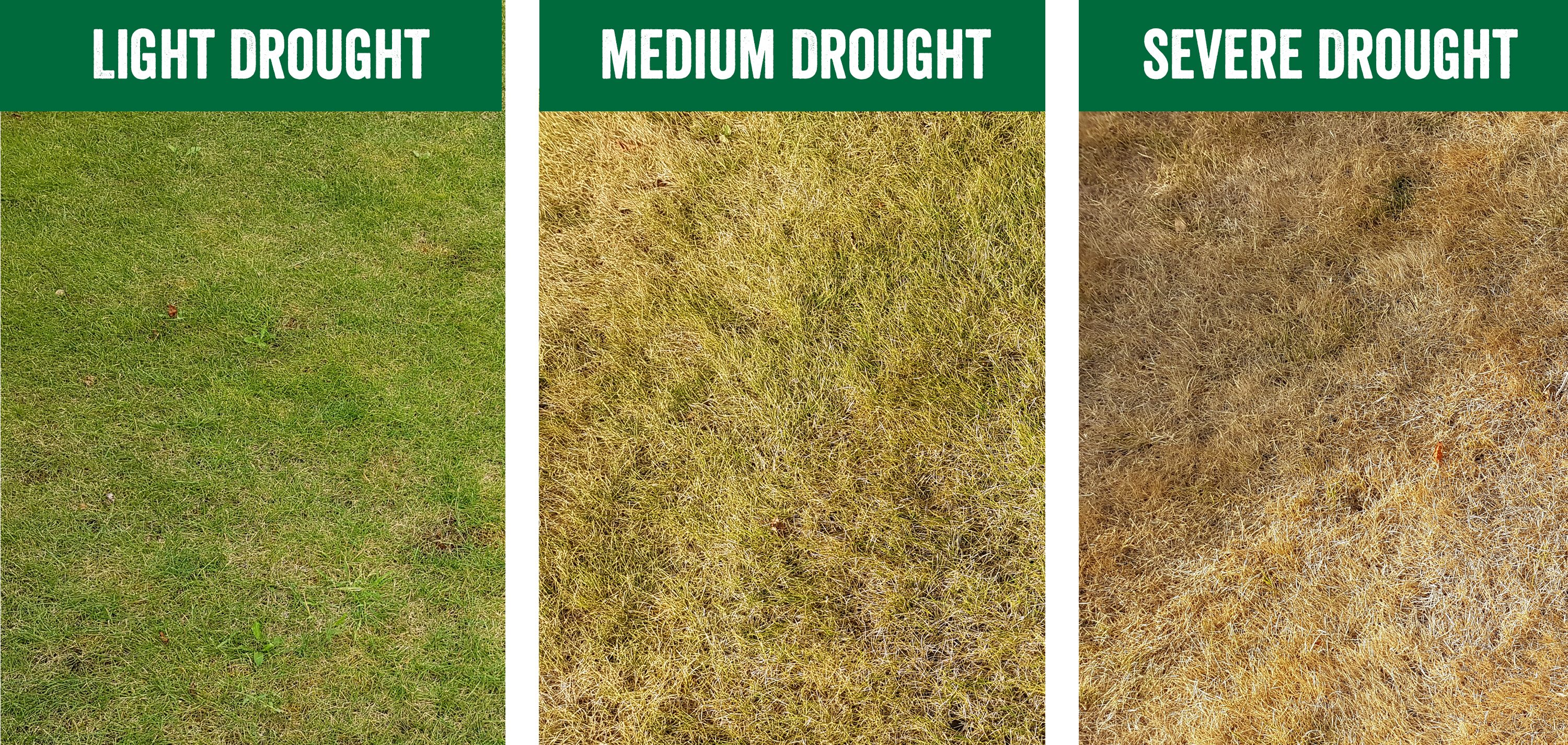How to Recover your Lawn After Drought