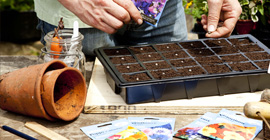 Seeds to Sow in May
