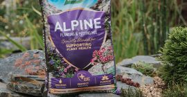 How To Create Your Own Alpine Garden/Rockery