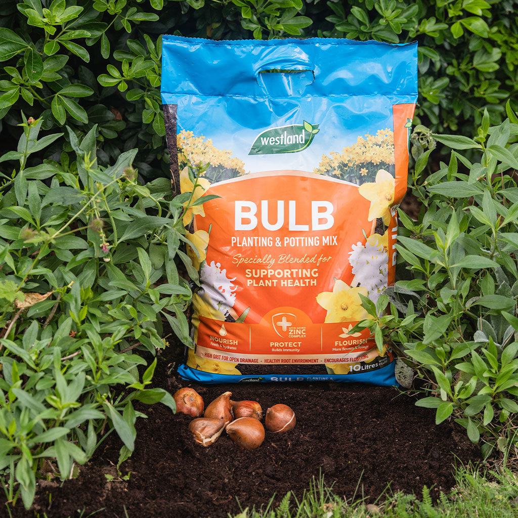 westland bulb planting compost in use