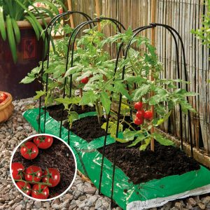 grow bag cane support frame in use