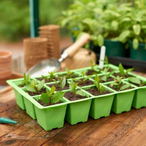 15 cell insert tray with seedlings