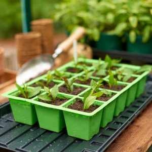 15 cell insert tray on watering tray