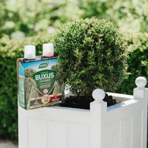 Buxus 2 in 1 Feed & Protect next to buxus