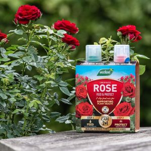 Rose 2 in 1 Feed & Protect next to rose