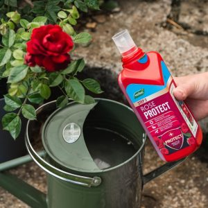 Rose 2 in 1 Feed & Protect in use