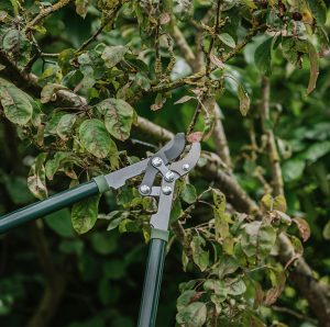 gardeners mate anvil loppers close up
