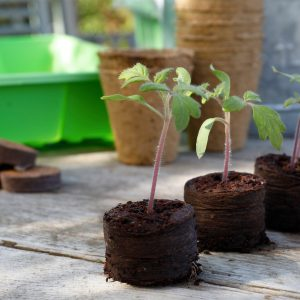 peat free compost disc growing