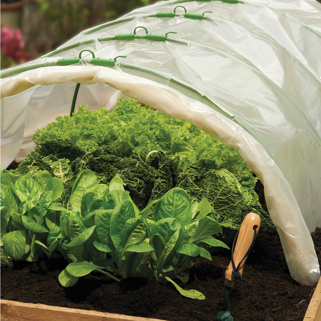 grow it poly sheet in use