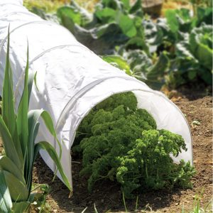 polythene grow tunnel on top of crops