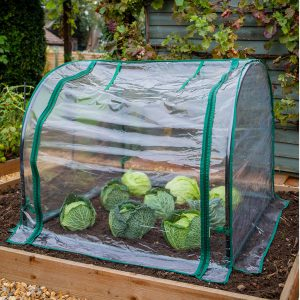 medium seedling cloche closed with cabbages