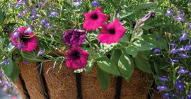 Hanging Baskets – Why Blacksmith?
