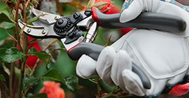 rose cut and hold secateurs