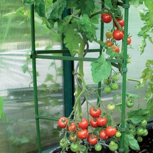 tomato support close up