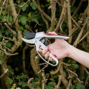 Kent & Stowe 2 in 1 Ratchet Secateurs in use