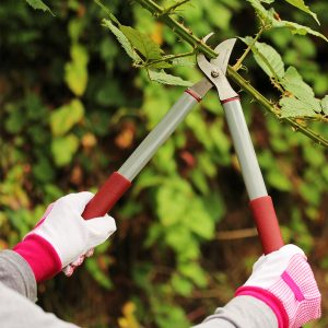 garden life lighter bypass loppers in use