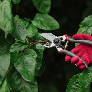 Kent & Stowe Professional Anvil Secateurs in use