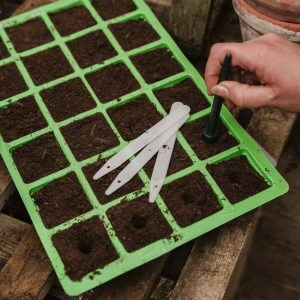 Using dibber to create seed sowing holes