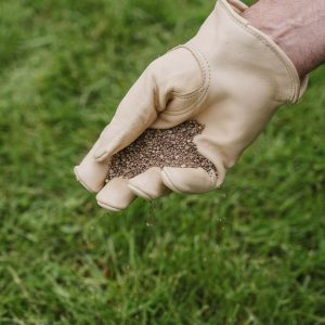 spreading lawn seed