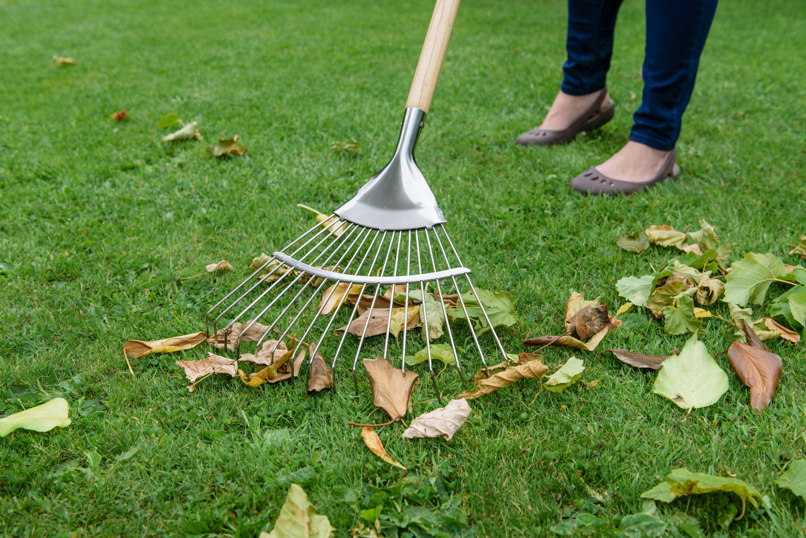 kent & stowe lawn rake in use - Jobs to do in Autumn