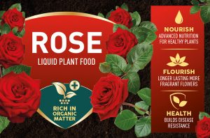 rose feed info