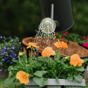 container and basket planting mix water plants