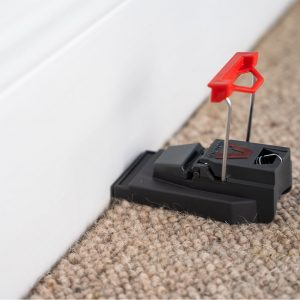 Deadfast Quick-Kill Mouse Traps in use