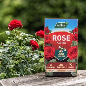 Westland Specialist Rose Plant Food with rose