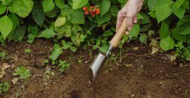 Our Favourite Bulb Planting Tools