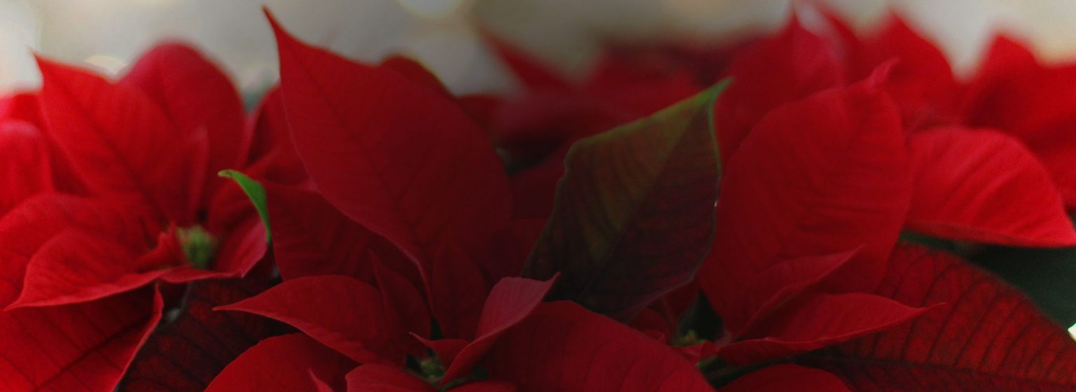 Essential Gardening for December