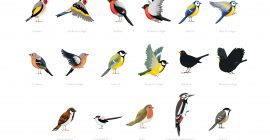 Bird Identifier Guide