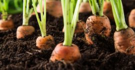 How to grow vegetables in planting soil