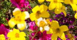 How to grow flowers in planting soil