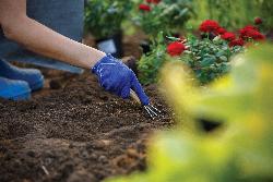 veg soil