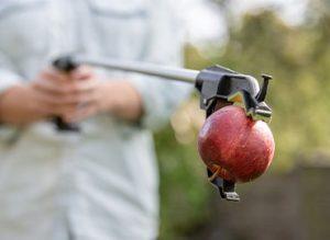 Garden tidy - apples