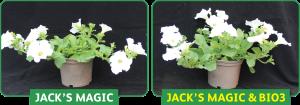 jacks magic vs jacks with bio3