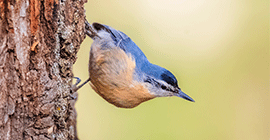 Look out for these Garden Birds in Autumn
